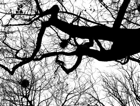 Strange Days Photograph 05