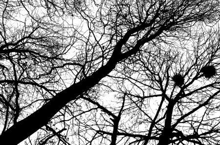 Strange Days Photograph 09